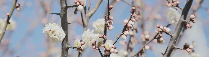 あなたにとって仕事のやりがいとは? – 目の前の人に感謝の心を伝えて、春に花を咲かせましょう